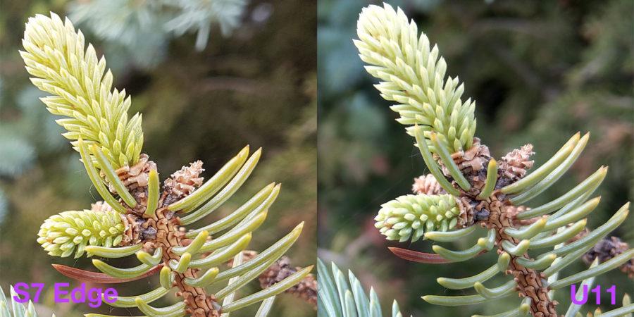 100-процентный кроп из снимков, сделанных на Samsung S7 Edge (слева) и HTC U11 (справа) - макро, боке, цветопередача