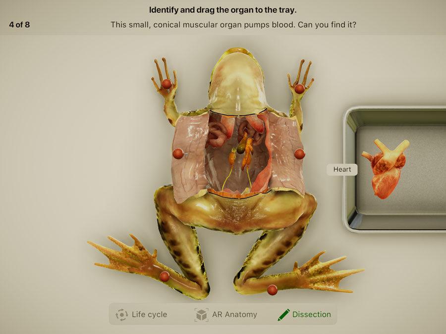 Препарирование лягушки в приложении Froggipedia