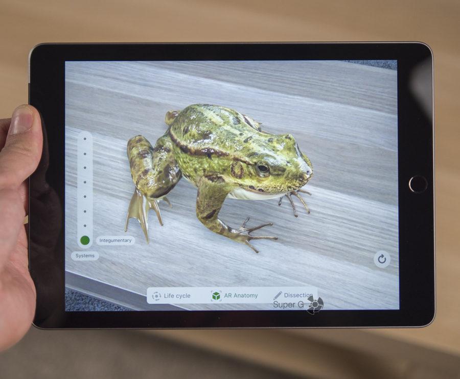 Приложение Froggipedia на iPad 2018 позволяет поместить на стол виртуальную лягушку
