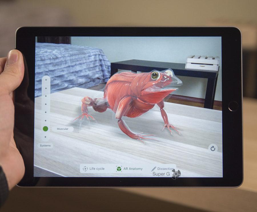 Исследуем виртуальную лягушку при помощи iPad 2018