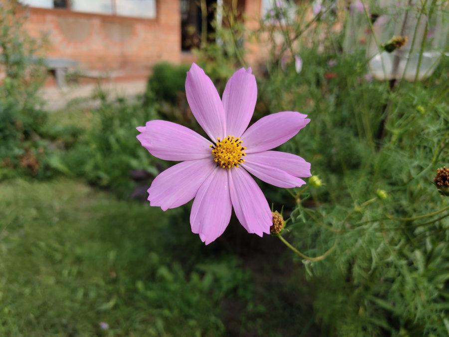 Пример фото с камеры Vivo NEX (макро)