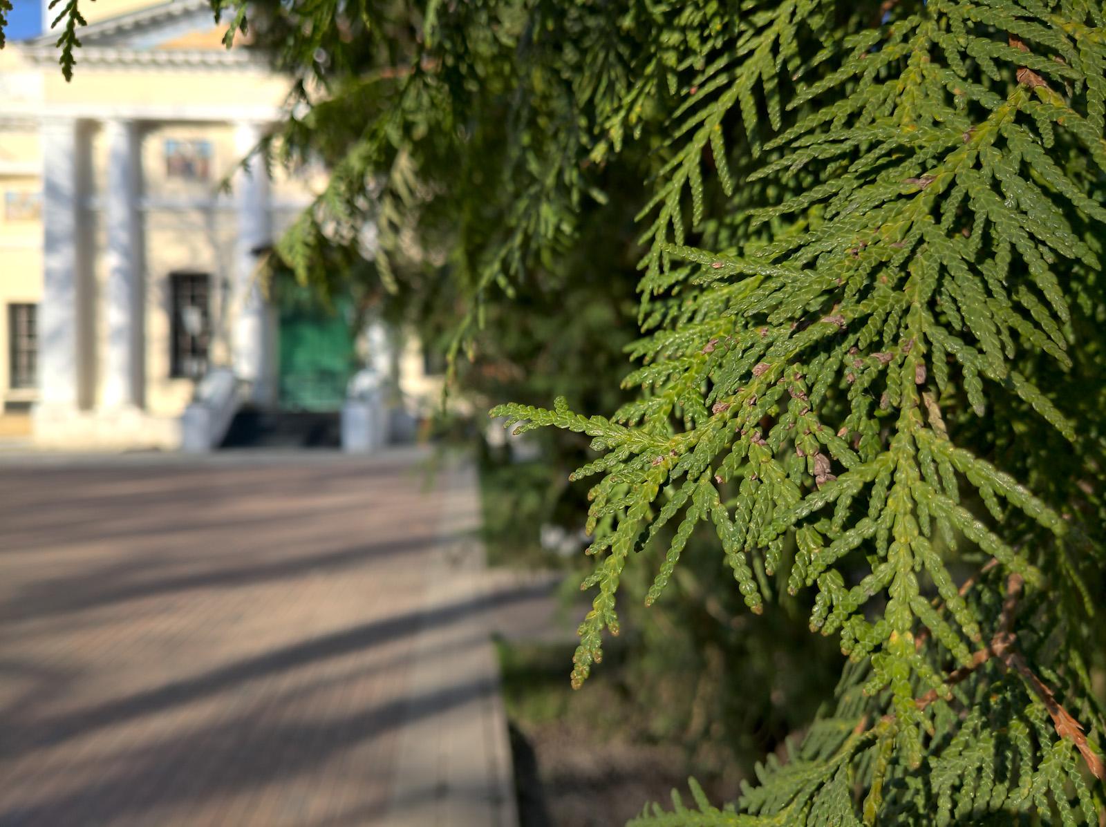 Пример макро фото с камеры Nokia 9 PureView