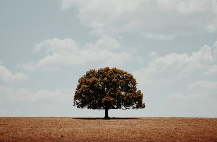 Glenn Homann - 1 место в номинации Деревья