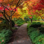 bagshaw_tree_hall