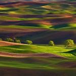 row_of_trees_palouse