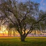 the_solo_tree