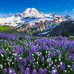 wildflowers_in_afternoon