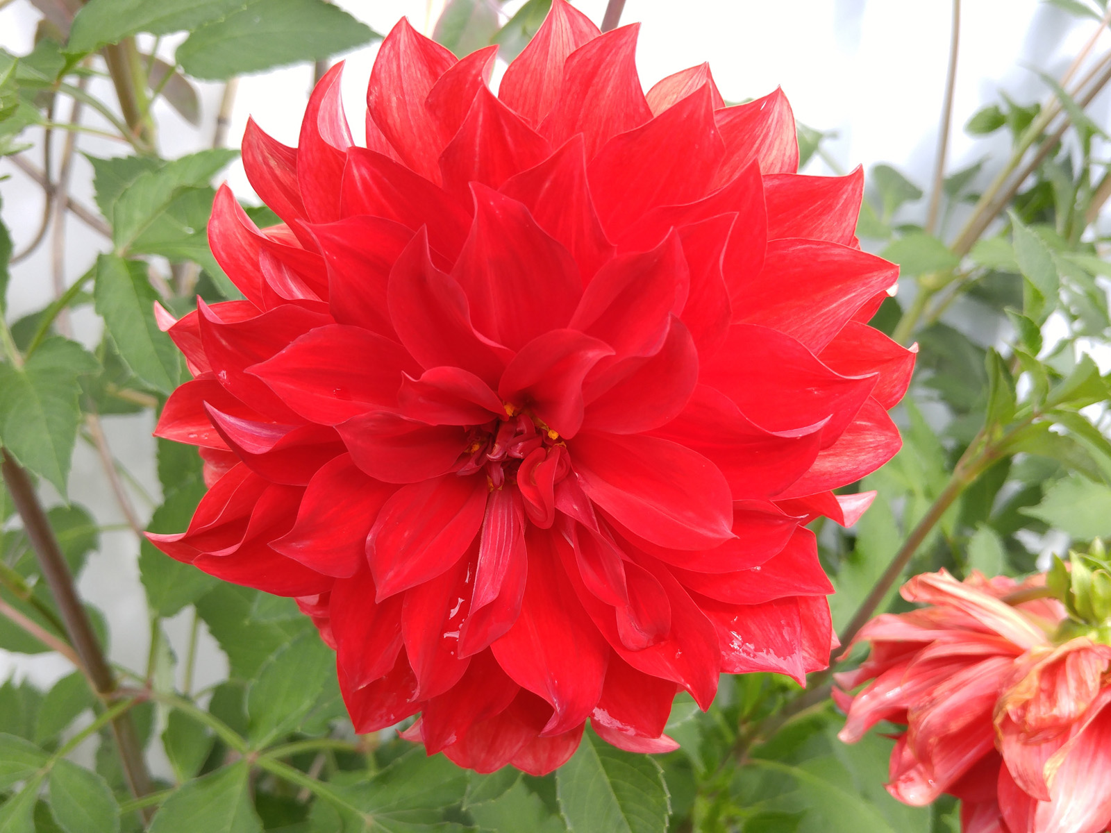 Яркий цветок (LG G4)