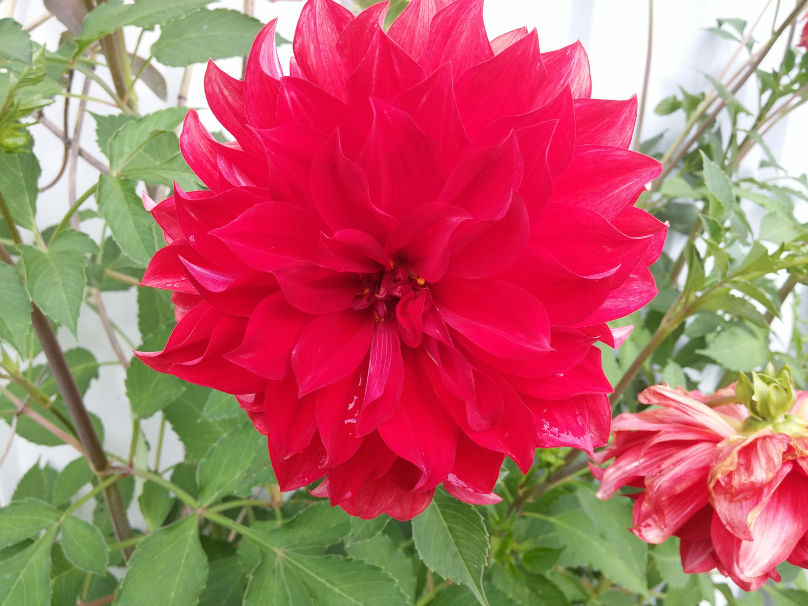 Яркий цветок (LG G3)