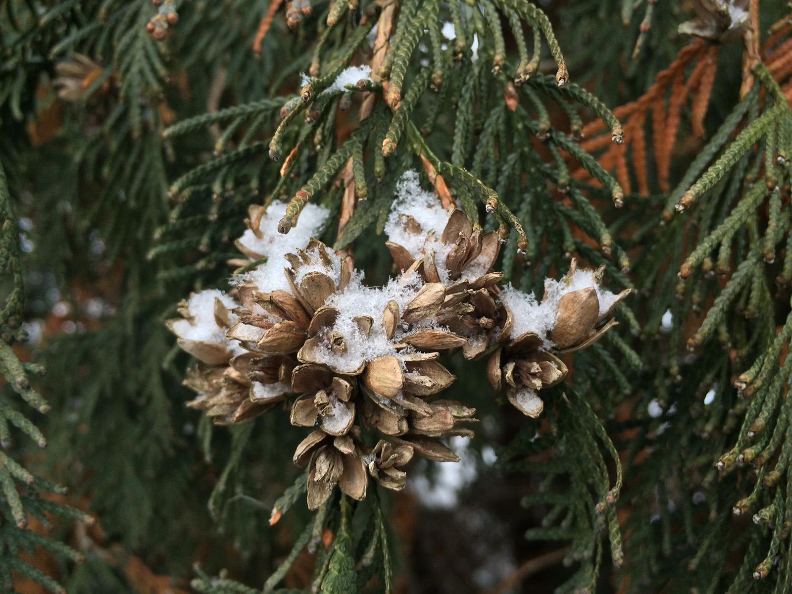 Тестовое фото с камеры iPhone 5S (зима)