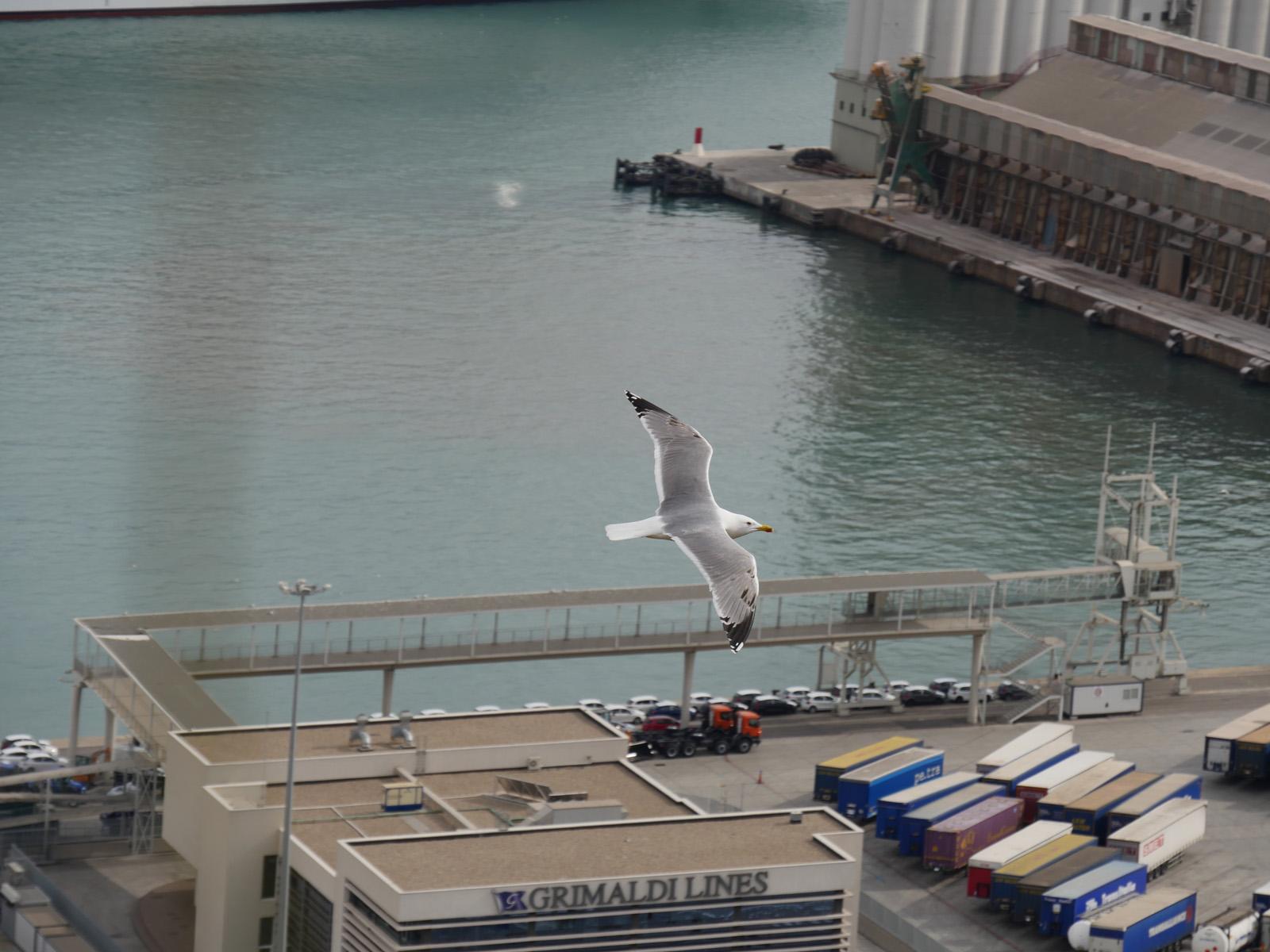 Автофокус самостоятельно поймал чайку