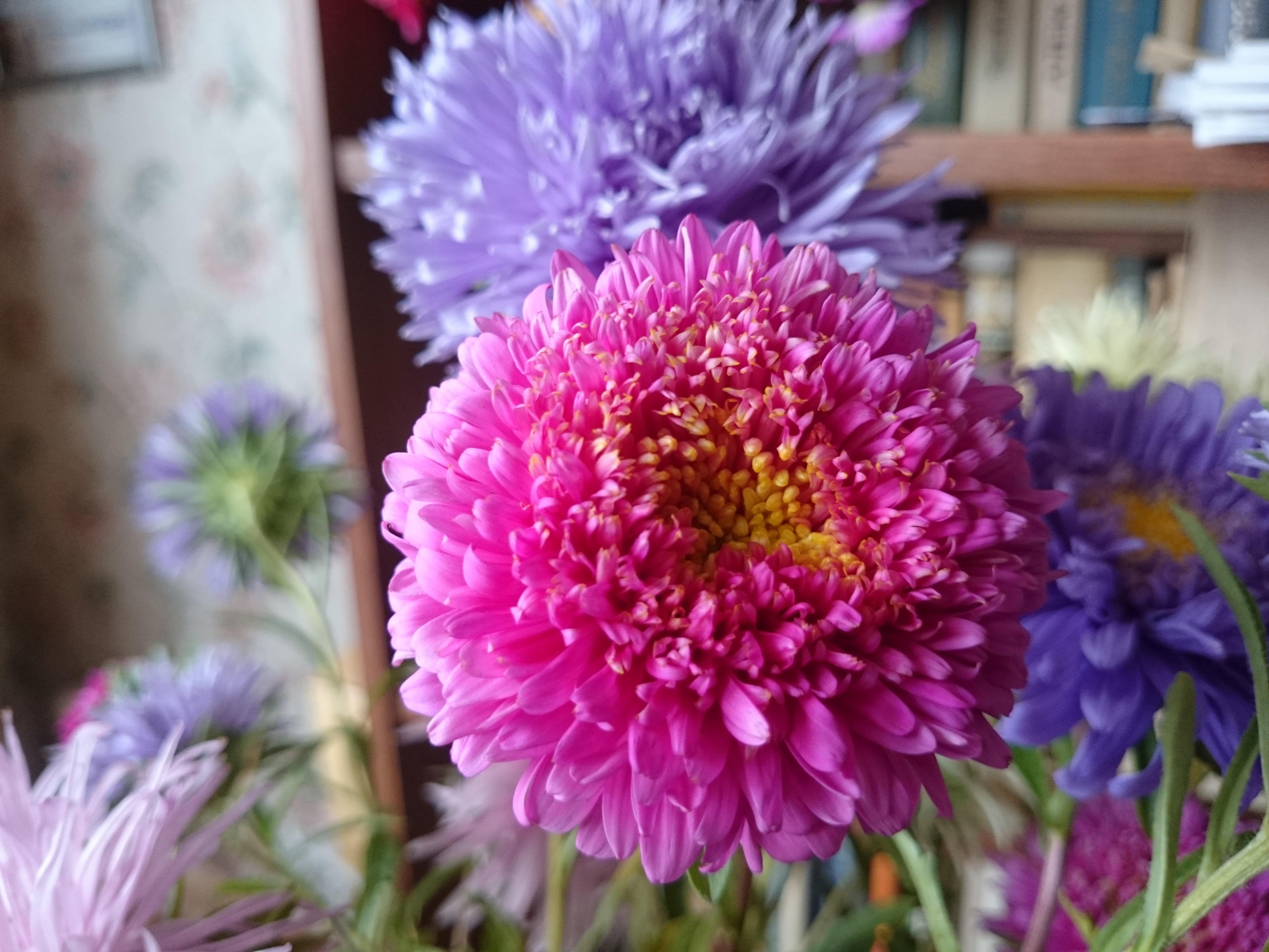 Z2 Цветы HiRes