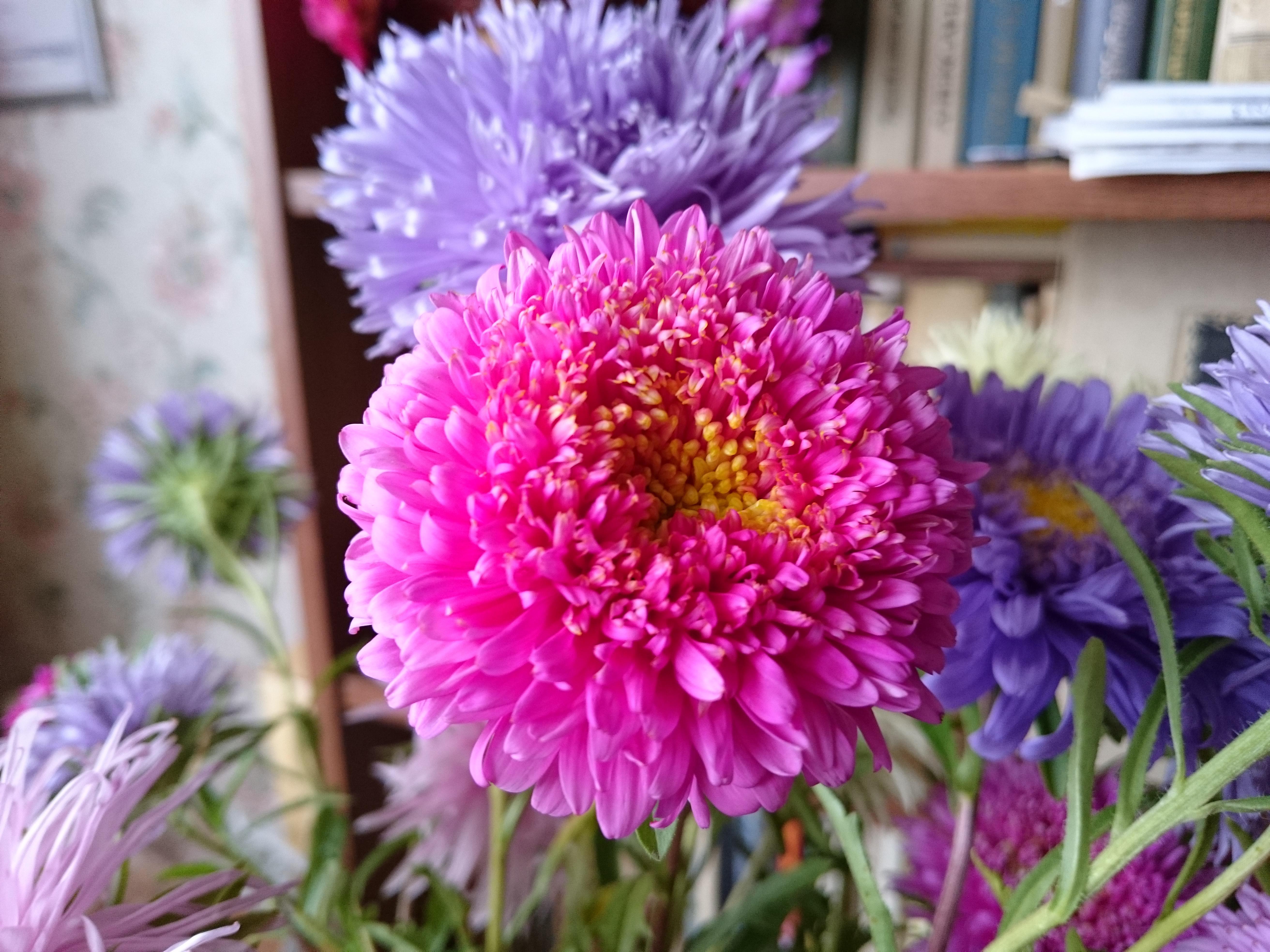 Z3 Цветы HiRes