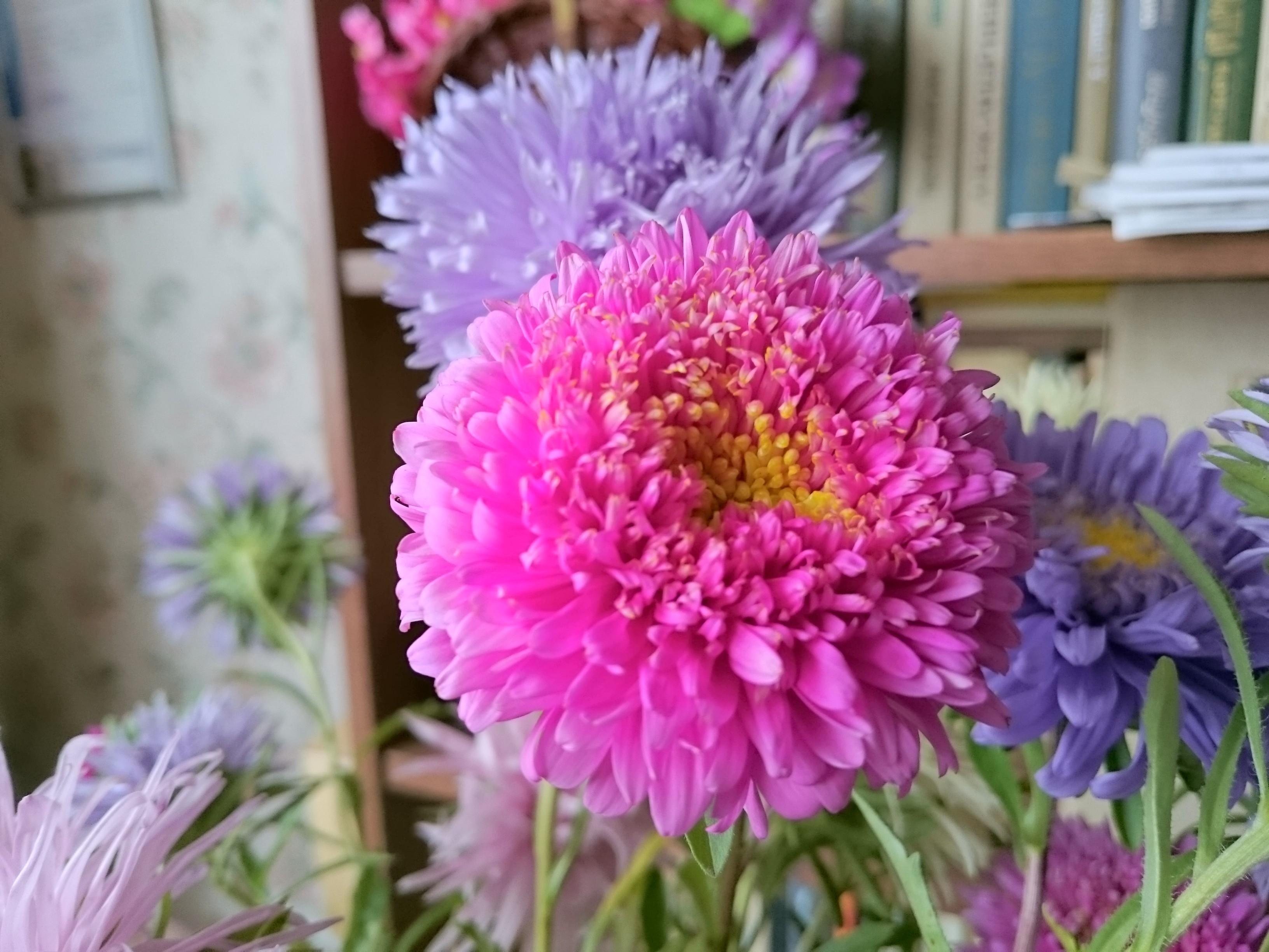 Z3 Цветы